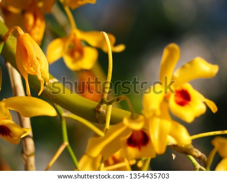Beautiful orchid photos #1354435703