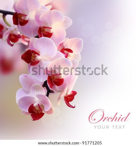 Beautiful orchid purple (orchid flower border design)