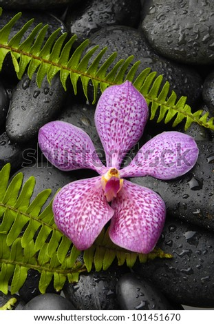 Beautiful orchid with fern on pebbles background