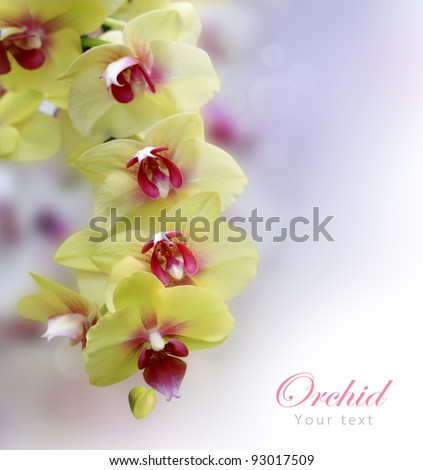 Beautiful Orchid yellow and pink