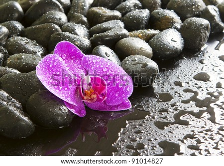 Beautiful orchids, black stones, drops of water on it.