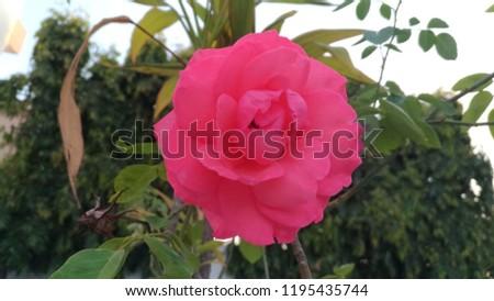 beautiful originals image pic no editing naturals in Nainital India