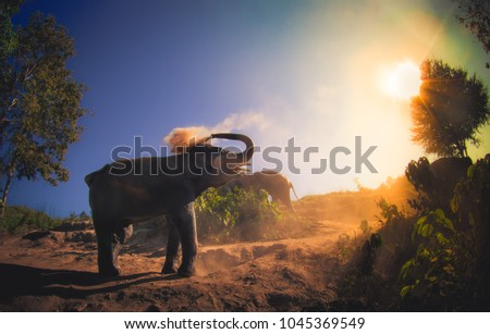 Beautiful outdoor view of young elephants walking near the riverbank in the nature, at Elephant jungle Sanctuary, in Chiang Thailand