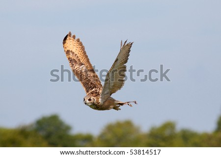 beautiful owl flying against blue sky stock photo 53814517