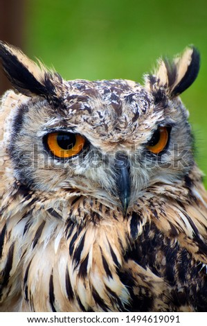 Beautiful Owl pictures taken in sussex (UK)