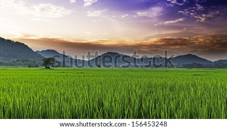 Beautiful paddy with nice background