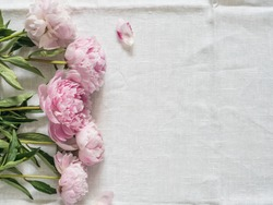 Beautiful pale pink peony. Top view of pink piones on white linen tablecloth background. Copy space for text. Flat lay. Horizontal