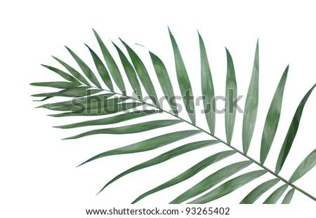 Beautiful palm leaf on blue background - stock photo