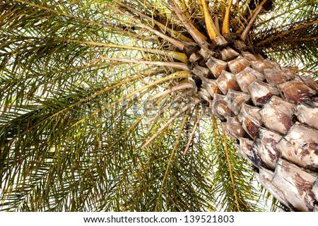 Beautiful Palm Tree as seen from below #139521803