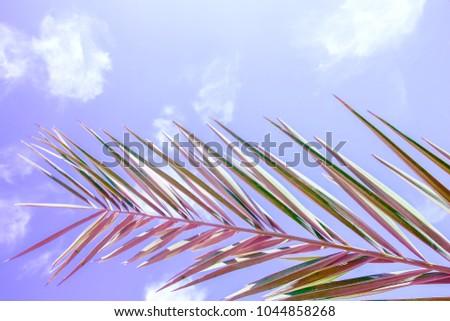 Beautiful palm tree on the sea shore background - Shutterstock ID 1044858268