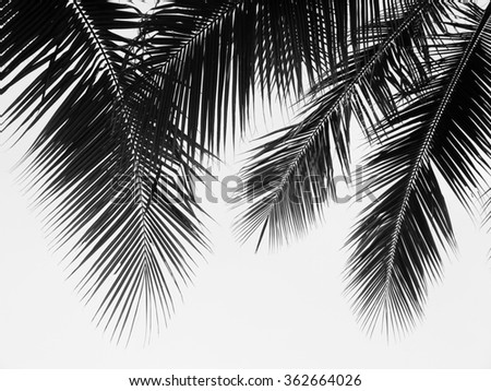 beautiful palms leaf on white background #362664026