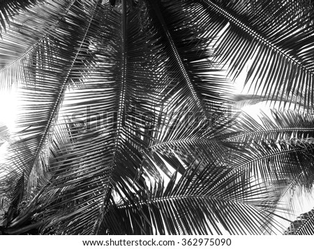 beautiful palms leaf on white background #362975090