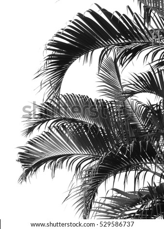 beautiful palms leaf on white background #529586737