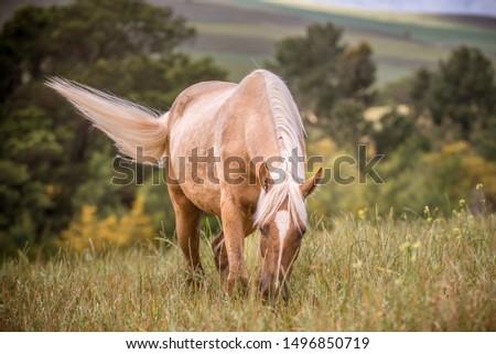 Beautiful Palomino Horse Running Free #1496850719