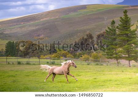 Beautiful Palomino Horse Running Free #1496850722