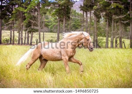 Beautiful Palomino Horse Running Free #1496850725