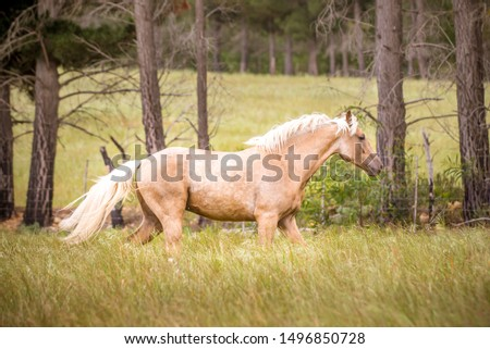 Beautiful Palomino Horse Running Free #1496850728