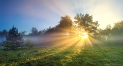 beautiful panorama landscape with sun and forest and meadow at sunrise. sun rays shine through trees. panoramic view