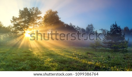 beautiful panorama landscape with sun and forest and meadow at sunrise. sun rays shine through trees. panoramic view #1099386764