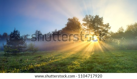 beautiful panorama landscape with sun and forest and meadow at sunrise. sun rays shine through trees. panoramic view #1104717920