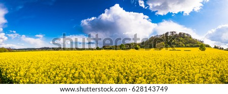 Beautiful panorama of field of bright yellow rapeseed in spring. Rapeseed (Brassica napus) oil seed rape #628143749