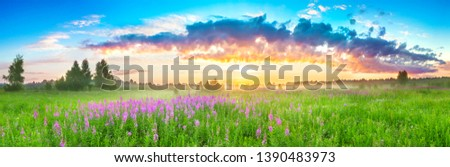 beautiful panorama rural landscape with sunrise  and  blossoming meadow. purple flowers flowering on spring field. wild flowers blooming on sunset. summer panoramic view
