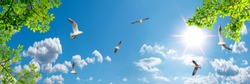 Beautiful panorama sky on sunny day. Flying seagulls and green tree branches