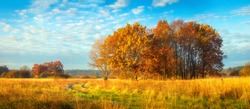 Beautiful panoramic autumn nature landscape. Sunny morning on autumnal meadow. Scenic autumn. Scenery of golden trees on grassy wild field