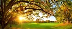 Beautiful panoramic autumn scenery with a large tree on a green meadow and the setting sun shining through the arch-shaped branches