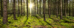 Beautiful panoramic forest with the morning sun shining through the trees. Ardennes, Belgium.