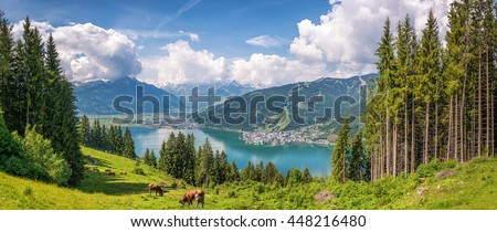 Beautiful panoramic view of cow grazing in fresh green meadows in the Alps with famous city of Zell am See and idyllic Zeller Lake on a sunny day in spring in Salzburg, Salzburger Land, Austria