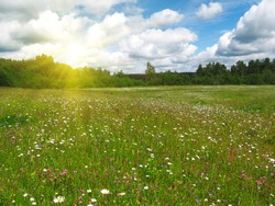 Beautiful panoramic view with spring flowers meadow and shining sun. Rural summer concept. Text copy space