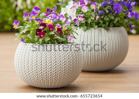 beautiful pansy summer flowers in flowerpots in garden #655723654