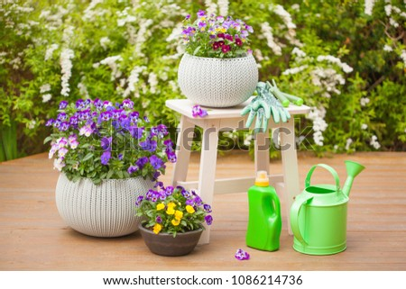 beautiful pansy summer flowers in garden, watering can, tools #1086214736