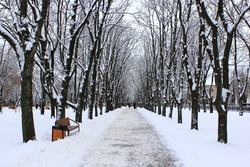 Beautiful park alley with bench and trees in winter sunny day. Beautiful park with promenade path and trees covered by snow. Empty city park in winter
