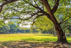 Beautiful park scene in public park with green grass field,