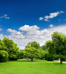 beautiful park trees over blue sky. formal garden