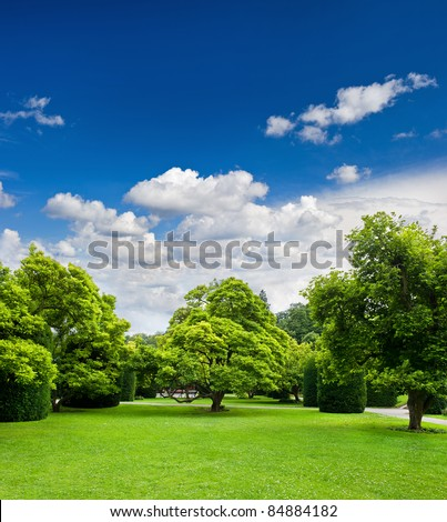 beautiful park trees over blue sky. formal garden #84884182