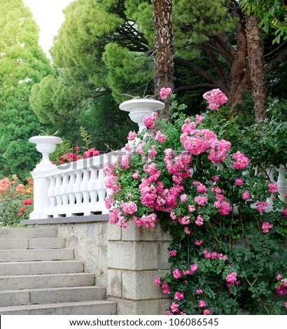 Beautiful park with blooming roses