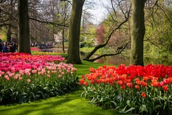 beautiful park with blooming spring flowers on a sunny spring day, Netherlands