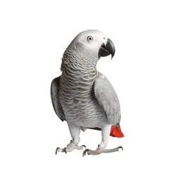 Beautiful parrot on a white background