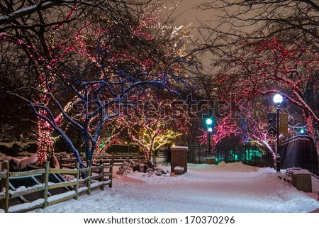 Beautiful path lined by colorful holiday lights