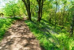 Beautiful path to Devil's Pulpit, Finnich Glen in Scotland