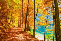 Beautiful pathway with yellow autumn trees on the shore of lake. Alps mountains, Austria