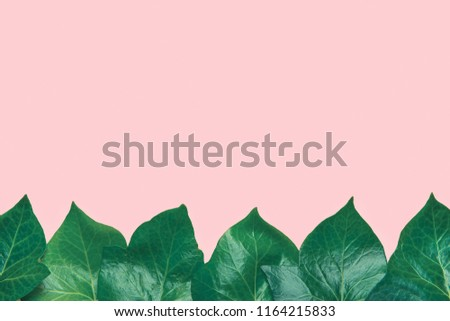 Ivy Green Leaf Isolate White Background Beautiful Pattern From Fresh Leaves Forming Frame Border On Light Pink