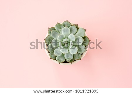 Beautiful pattern of green succulent isolated on pink background. Flat lay, top view.