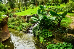 Beautiful peaceful nature of green lawn forest in the jungle rain tropical forest with water river flowing in the retreat area