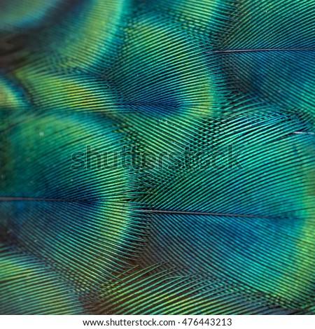 Beautiful peacock feather - Shutterstock ID 476443213