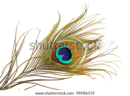 Beautiful peacock feather, close up ,on a white background