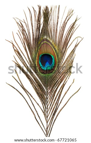 Beautiful peacock feather isolated on white background